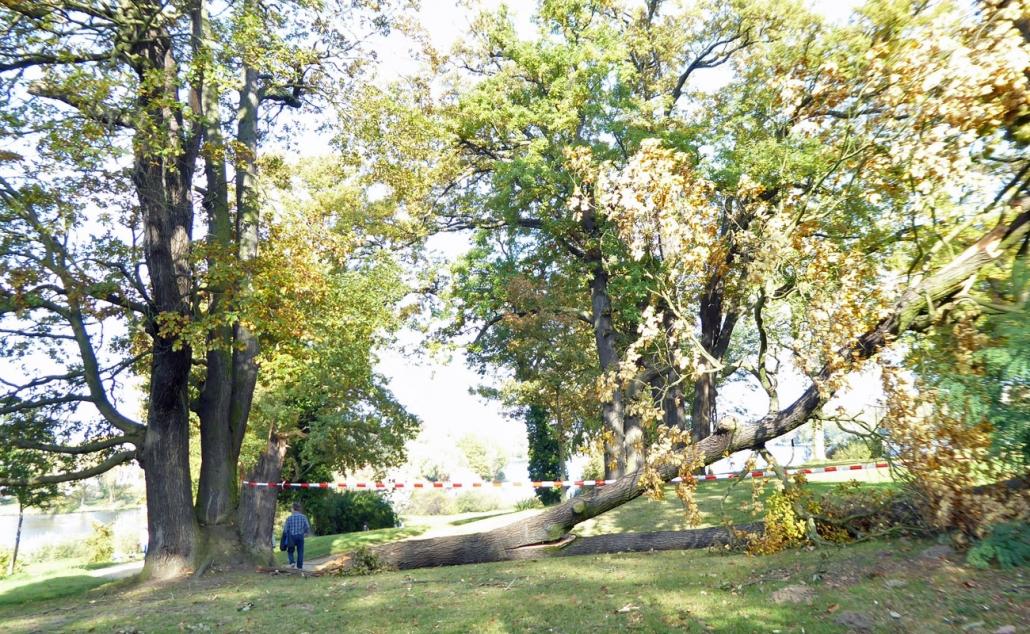 Der jüngste Sturm dürfte erneut den Wälder in Brandenburg einige Schäden zugefügt haben.