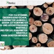 Submission von Brandenburger Holz